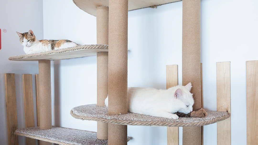 В Artplay открылось пространство для кошек, которые ищут дом