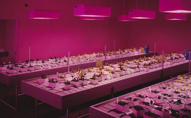 В «Гараже» откроется выставка Томаса Деманда. Художник представит ее лично